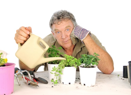 Middle aged nurseryman watering seedlings with a watering can. photo