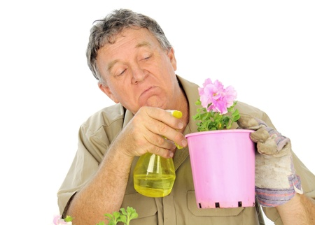 Fussy and careful middle aged gardener sprays a plant in a pot. photo
