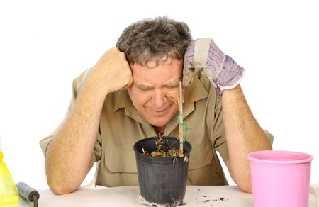 inconsolable: Bitterly disappointed gardener laments over his dead seedlings.