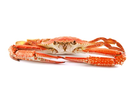 blue swimmer crab: Cooked sand crab or blue swimmer crab ready for cracking and serving. Stock Photo