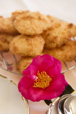 carpels: Beautiful camellia with water droplets in front of a stack of coconut macaroons.