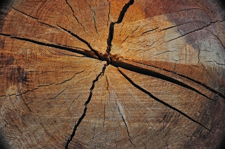 テクスチャとリングは、切り倒された年前この風化の古い成長ログの話します。過酷な天候に耐えることと、処理分割を引き起こしたこの古いログ 写真素材
