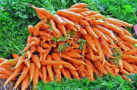 community garden: A pile of fresh carrots on display at a local farmers market, ready for the picking. Stock Photo