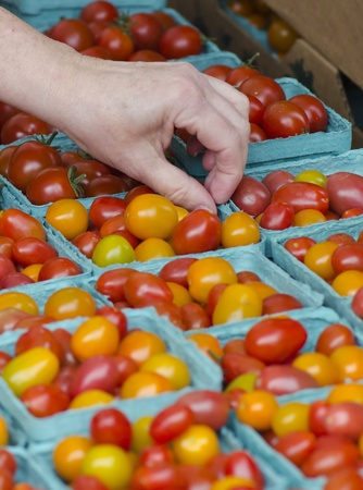 community garden: A consumer picks through the available cherry tomatoes at a local farmers market.