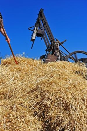 bailer: A farner feeds a large pile of hay into a steam era hay bailer