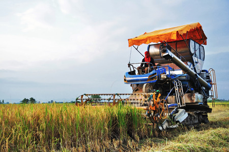combine harvester in rice field photo