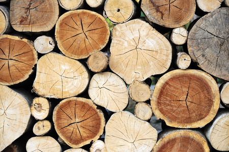 木材のログ背景の断面 写真素材