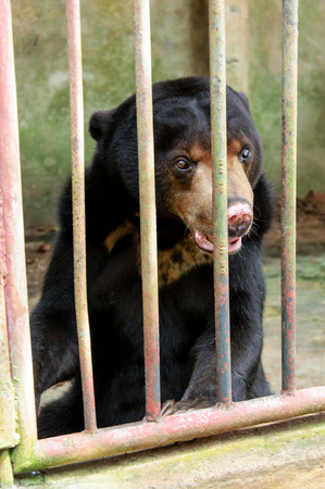 sufferer: sufferer bear in dirty cage