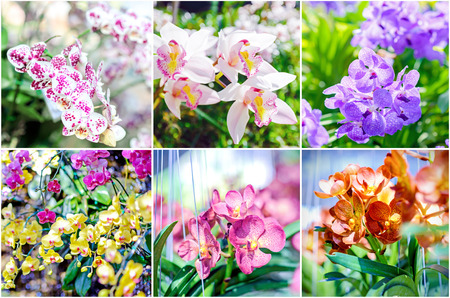 Collage of beautiful orchids photo