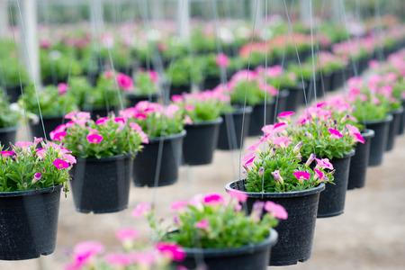 Opknoping bloempotten in een plantenkwekerij Stockfoto