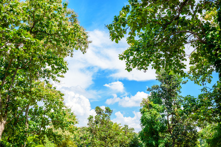 spring landscape of trees against blue sky photo