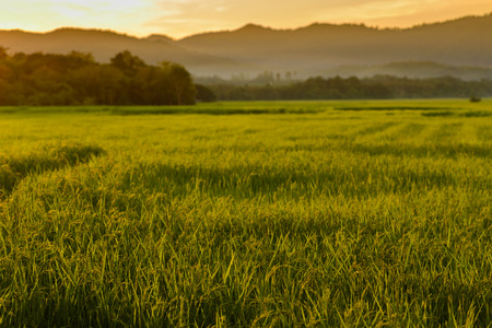 Green Rice Field with Mountains Background under Blue Sky and Clouds photo