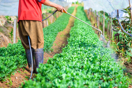 watered: Farmer watered in a green house Stock Photo
