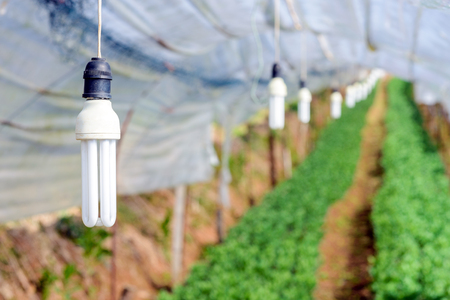 in the greenhouse: Lamp for lighting plant in greenhouse Stock Photo