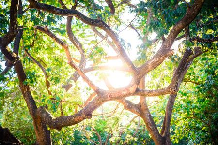 Sol a través de los árboles, la luz del sol en el bosque de árboles