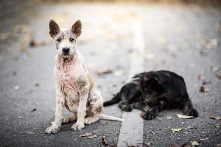 Cachorro callejero sucia en la calle