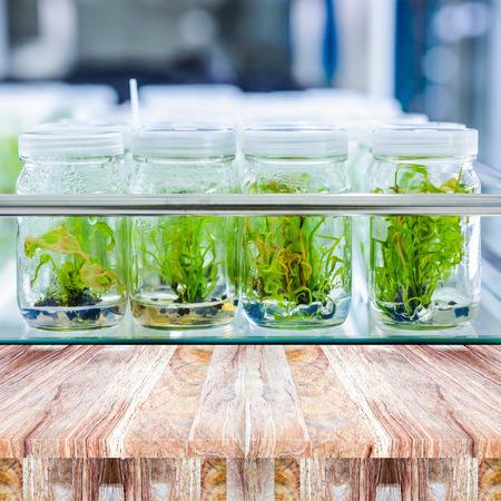 callus: plant tissue culture in the laboratory Stock Photo