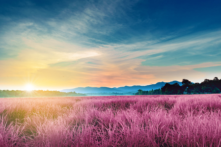 landscape of pink purple field with Mountains background in sunset Stock Photo