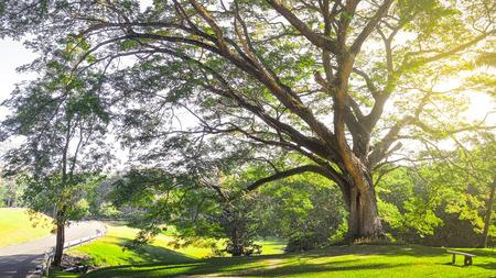 Big tree with sun light Stock Photo