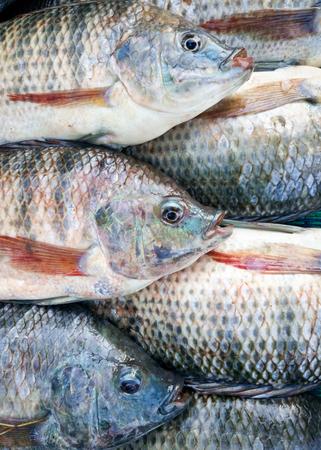 시장에서 신선한 tilapia 물고기 판매
