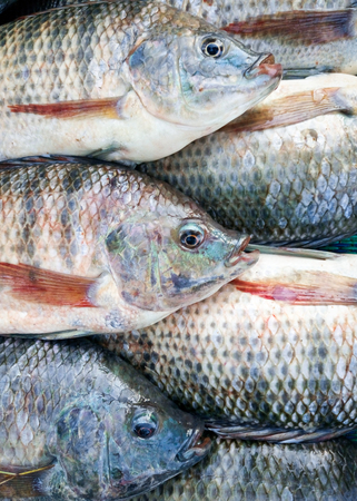 fresh tilapia fish sale in the market Imagens