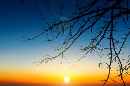 tree branch silhouette on beautiful twilight sunrise sky background