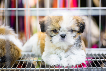 Puppies inside a cage on display for sale Stock Photo
