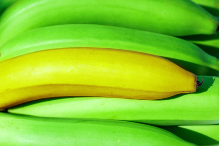 Closeup of a bundle of yellow bananas background