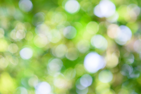 green bokeh background , Natural green blurred Stock Photo