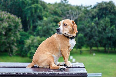 Cute Puppy Dog Sitting On Bench in Garden Stok Fotoğraf