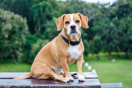 Cute Puppy Dog Sitting On Bench in Garden Stock fotó
