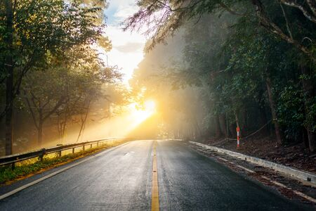 road through the autumnal forest on a foggy morning with sunbeams