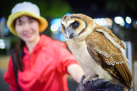 The owl sits on the happy girl's hand in night zoo