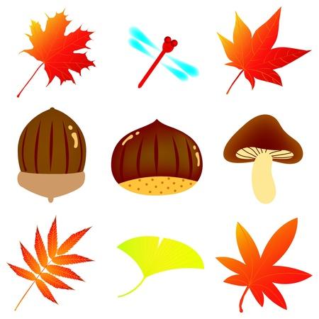 ginkgo: autumn