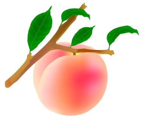 peach tree: peach