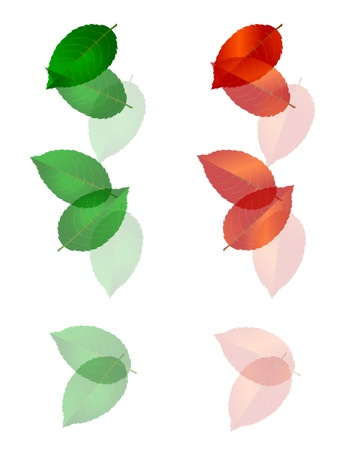 wakaba: young leaves and leaves Illustration