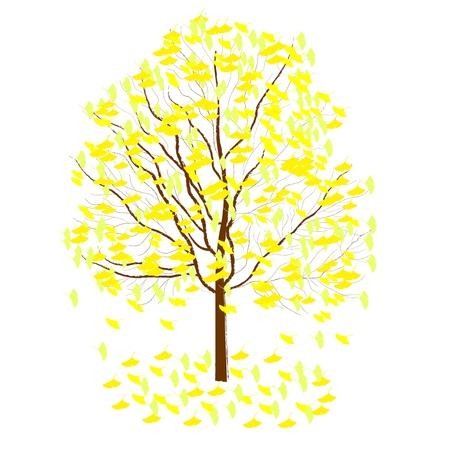 fallen: ginkgo tree Illustration