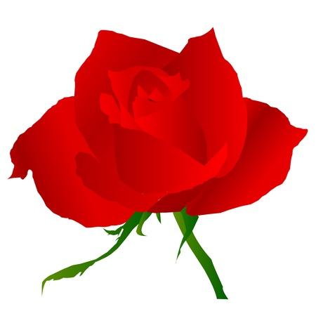 rose  flower Stock Vector - 16614650