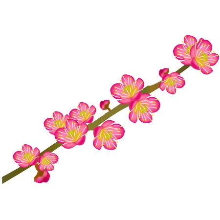 and he no background: plum flower Illustration