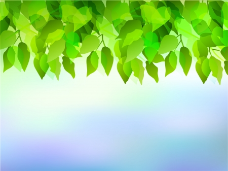 Plant leaves sky background Stock Vector - 17962835
