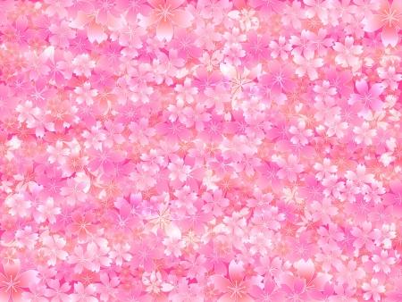 graduate asian: Pink cherry background