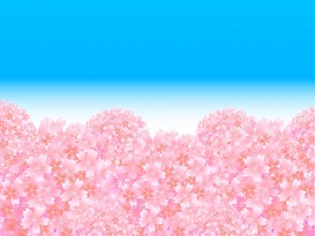 graduate asian: Spring cherry background Illustration