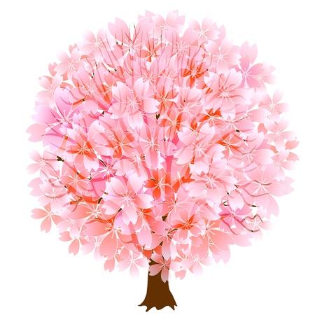 graduate asian: Thurs spring cherry Illustration