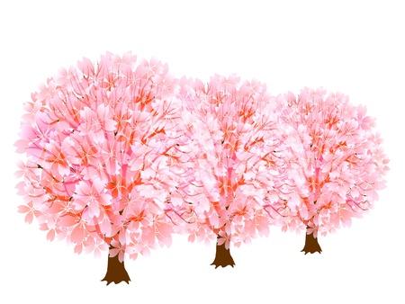 Thurs spring cherry Stock Vector - 18246073
