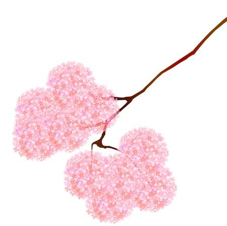 Thurs spring cherry Stock Vector - 18246074