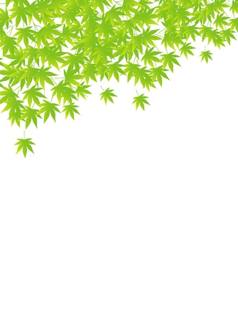 Summer maple leaf background Stock Vector - 18382984