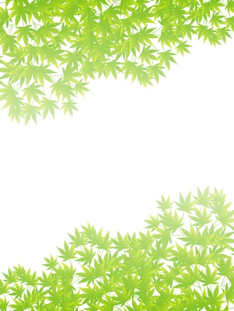 Summer maple leaf background Stock Vector - 18383074