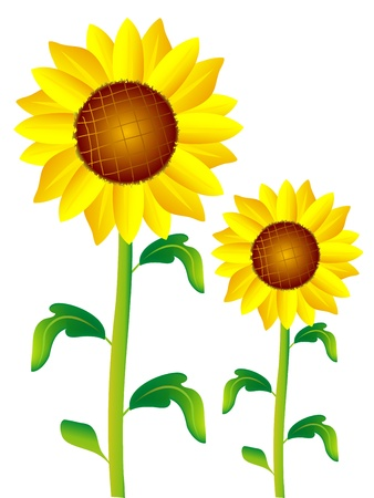 sunflower Stock Vector - 18484977