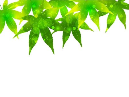 aoba: Maple background beautiful