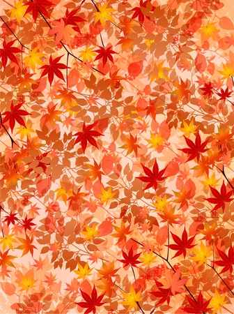 autumn leaves background: Maple autumn leaves background
